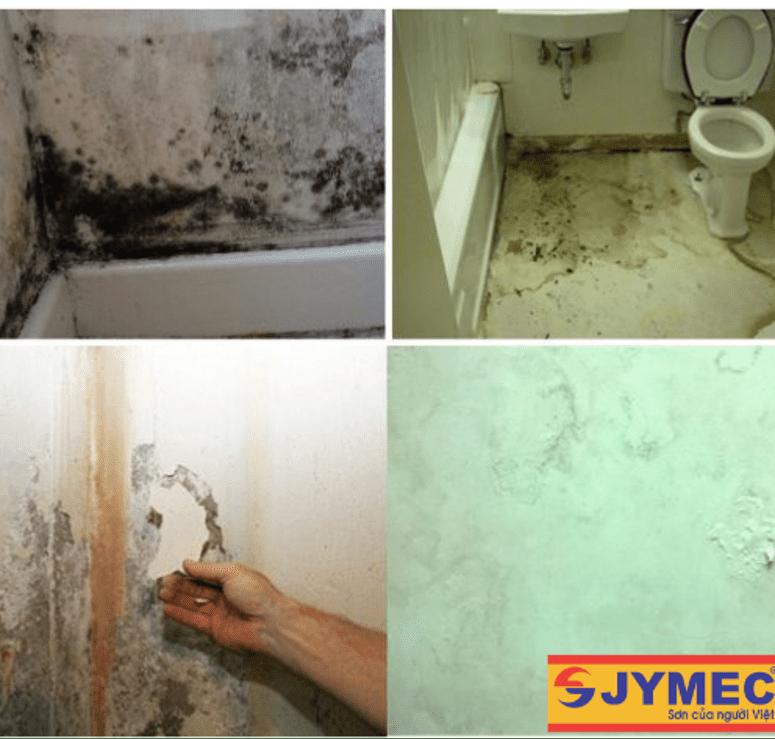 nhà vệ sinh bị thấm gây ẩm mốc